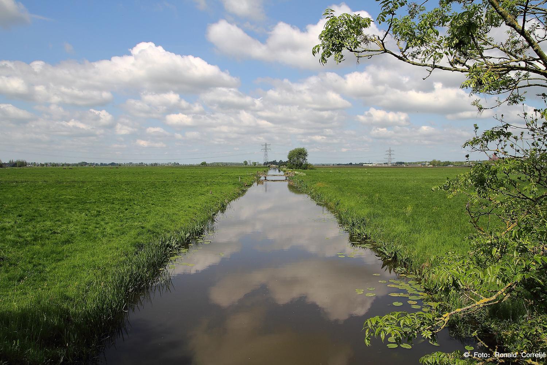 Rijnenburg Leidsche Rijn