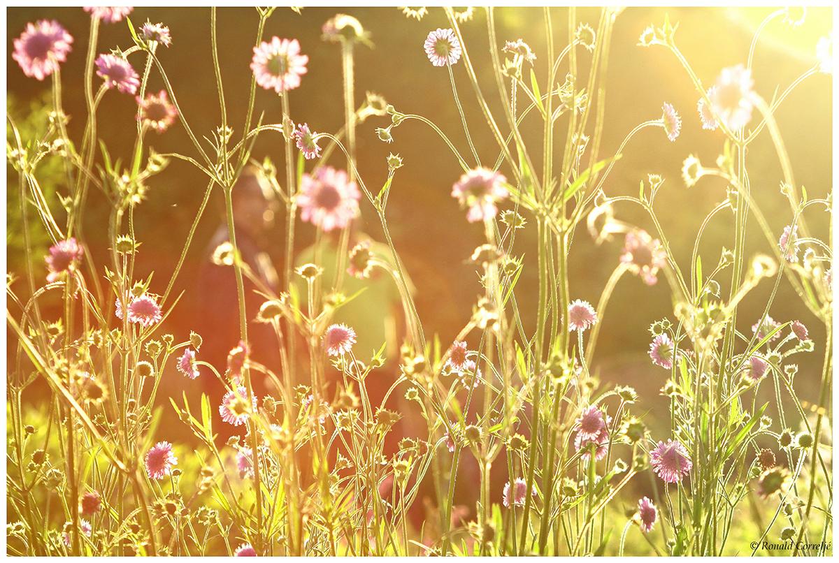 bloemen met tegenlicht