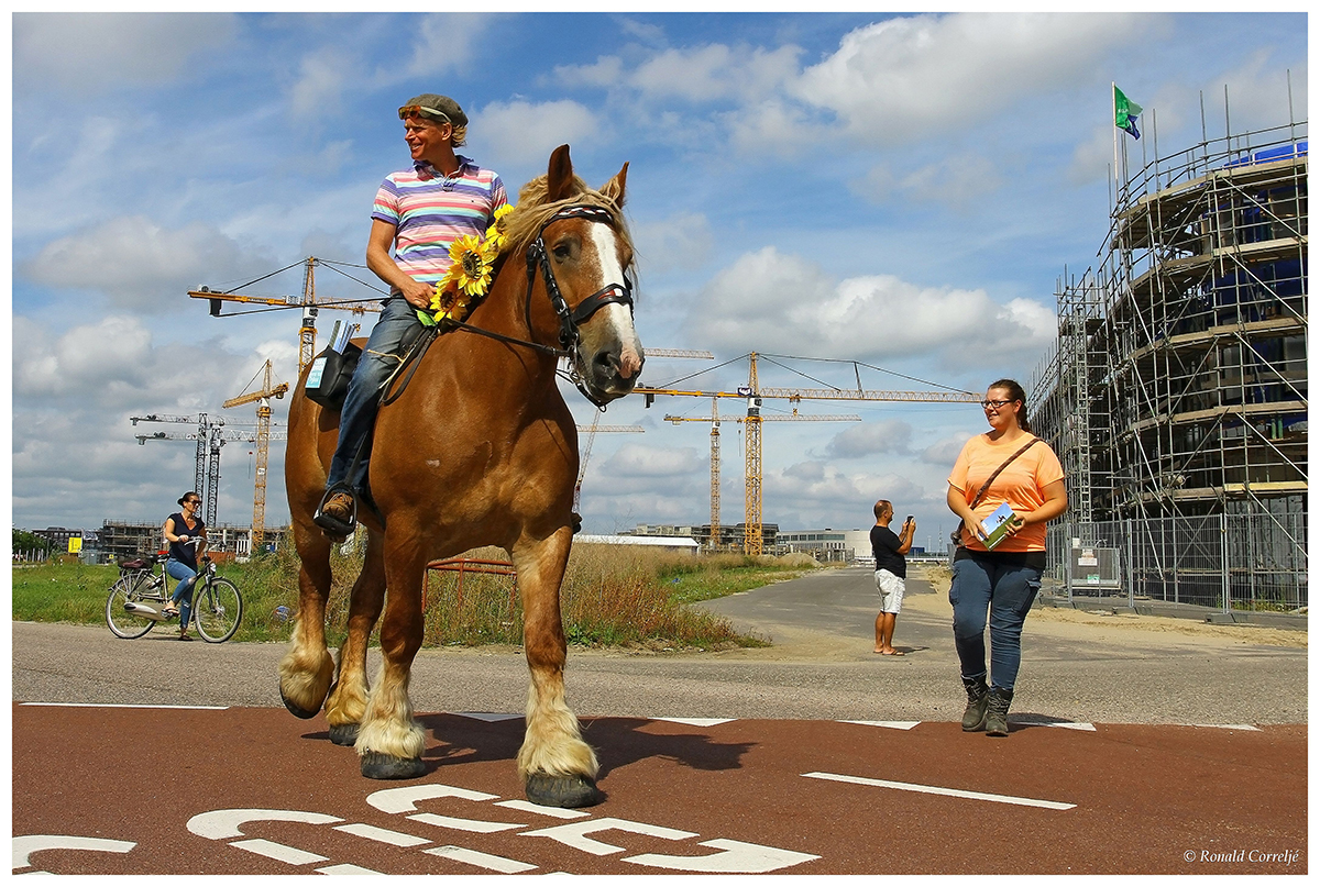 optocht met paard en ruiter