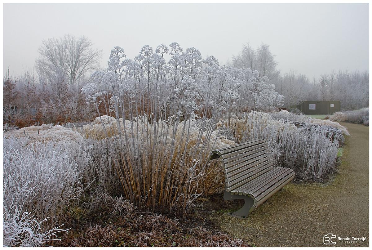 planten in tuin met rijp erop