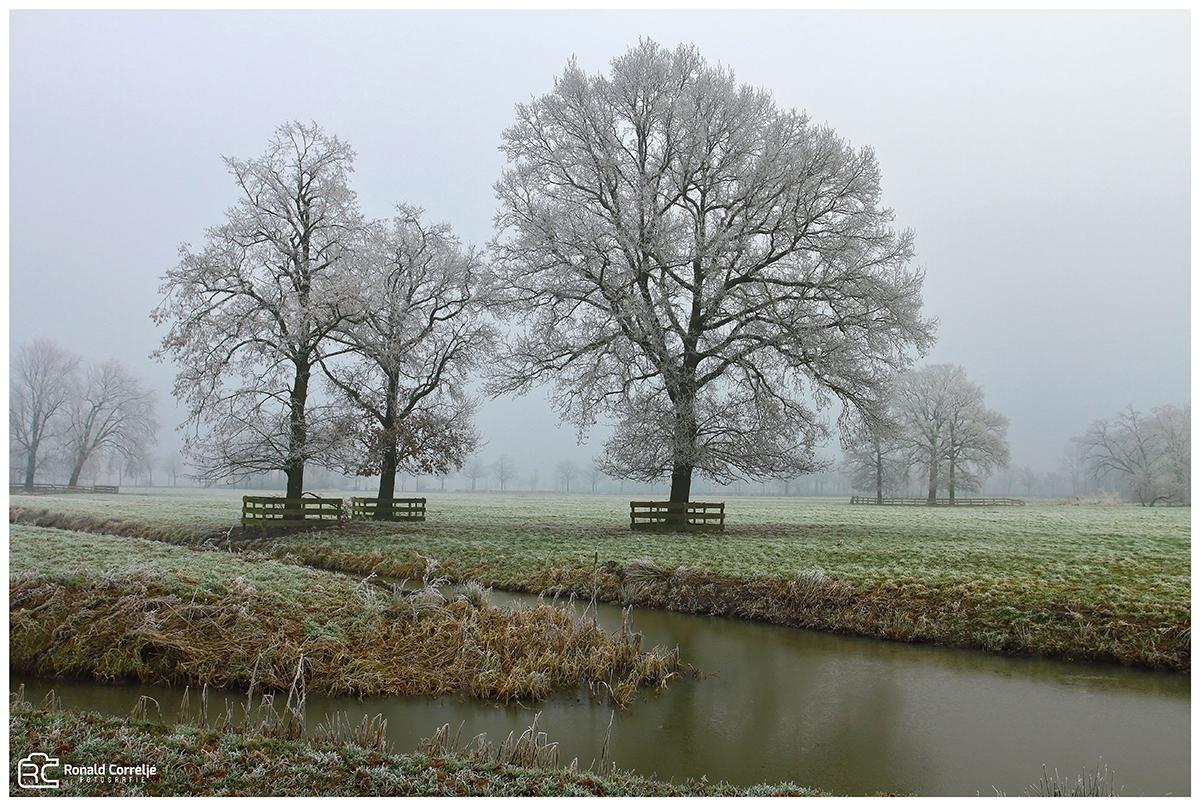 bomen op een weiland met rijp