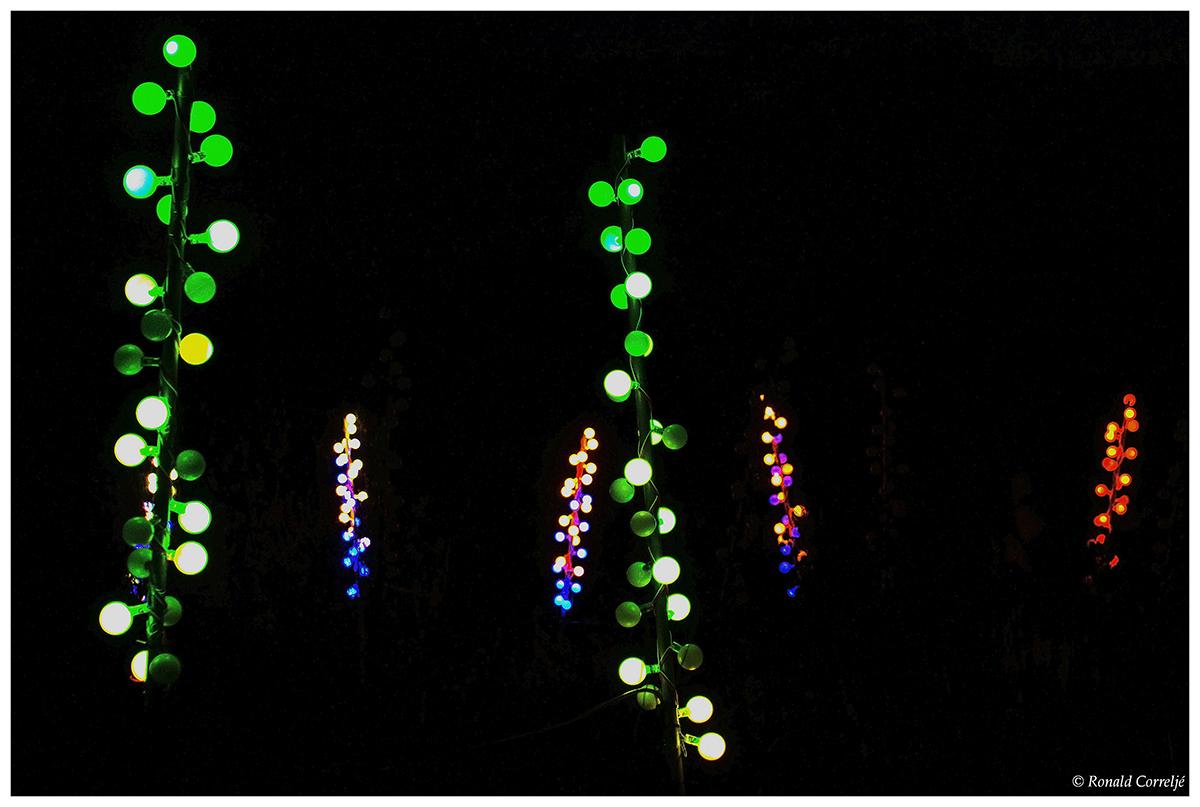 gekleurde lampjes in tuin