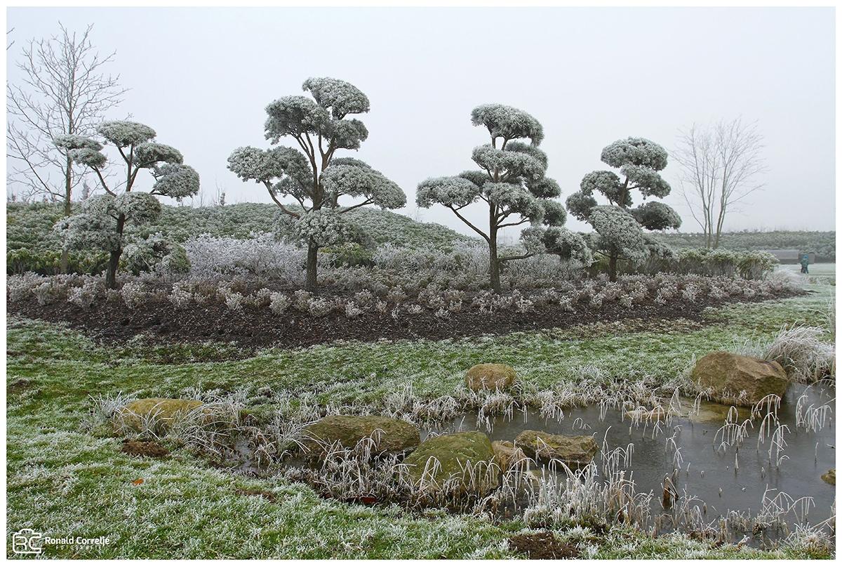Japanse tuin in de winter