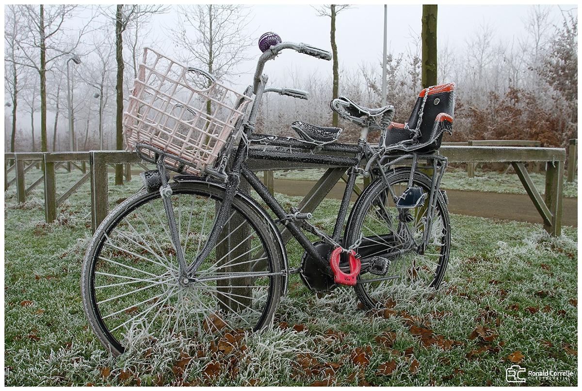 berijpte fiets in een bos