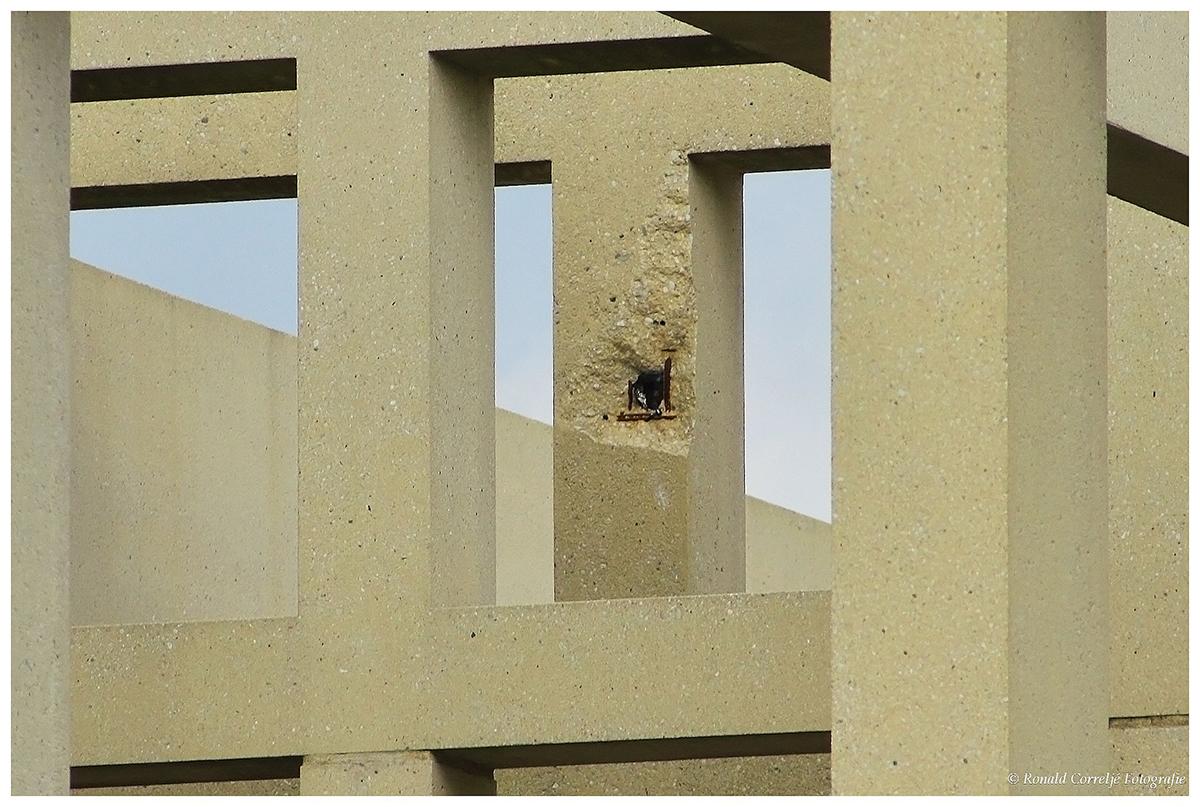 zichtbare schade aan betonkolom